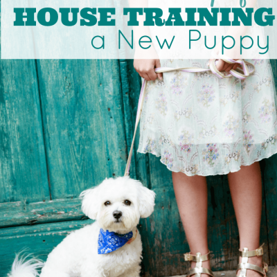 5 Practical Tips to House Train a New Puppy