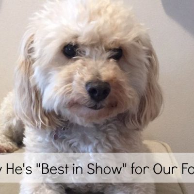 Why Our Dog is Best In Show for Our Family