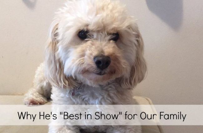 best in show title