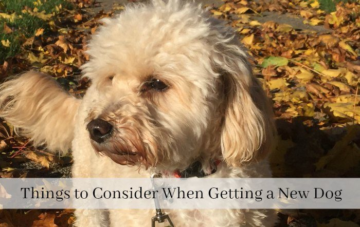 Things to Consider When Getting a New Dog