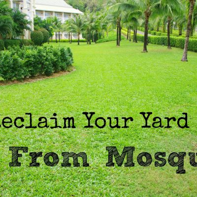 How to Reclaim Your Yard from Mosquitoes