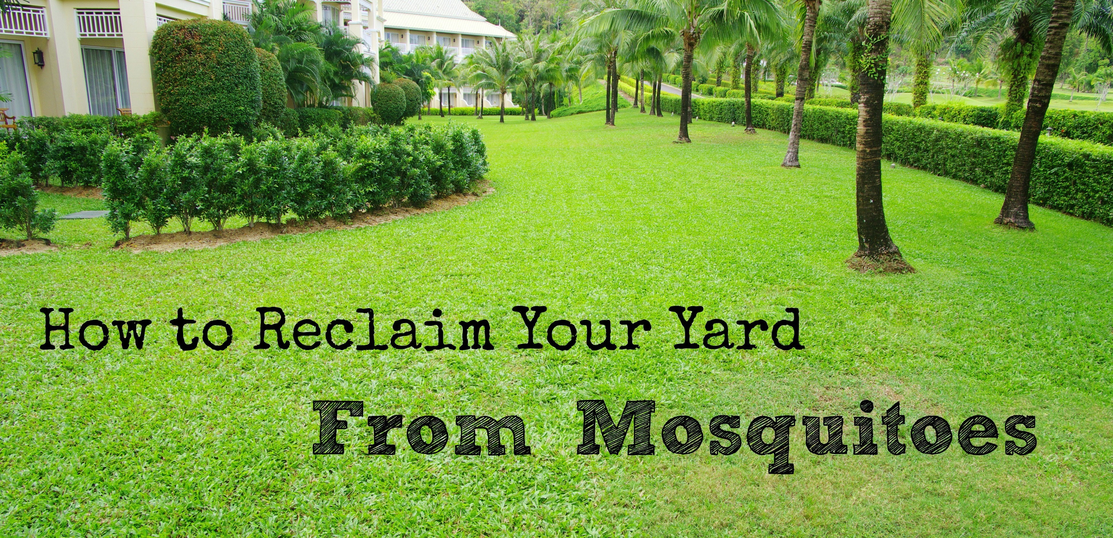Reclaim Your Yard From Mosquitoes