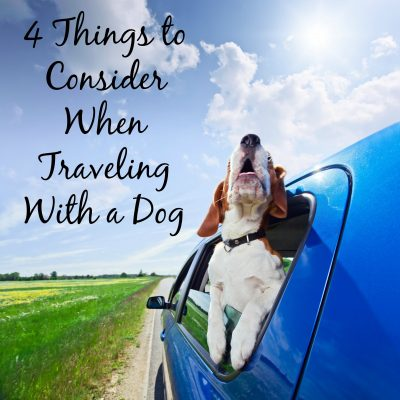 4 Things to Consider when Traveling with a Dog