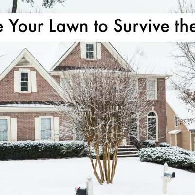Winter Lawn Care: What You Need to Know from TruGreen