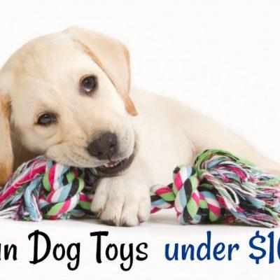Ten Fun Dog Toys Under $10
