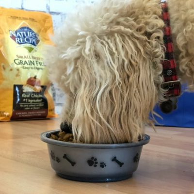 Keep Your Dog's Tail Wagging with Nature's Recipe