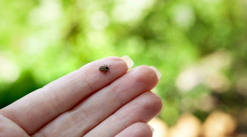 common tick on finger