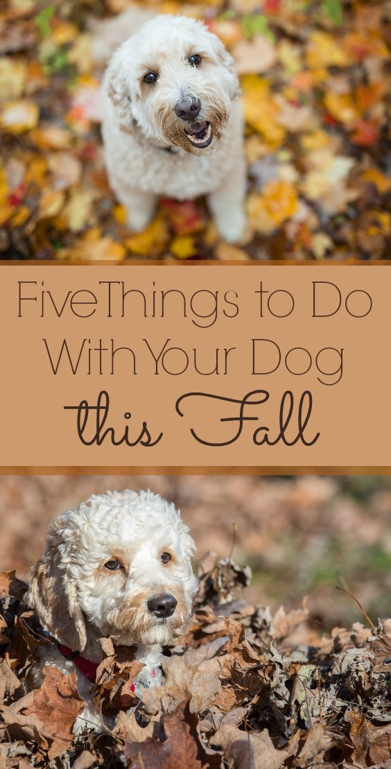 Fun Things to Do with Your Dog This Fall - Fall is one of our favorite seasons. Here are some idea of how to include your furry friends in the fun.