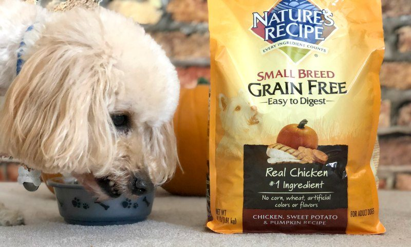 Fun Fall Things to Do with Your Dog