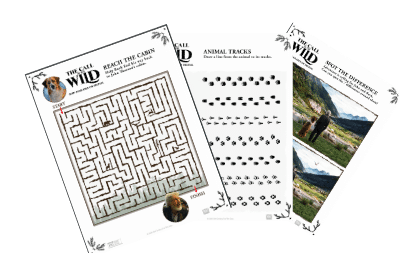 call of the wild activity sheets