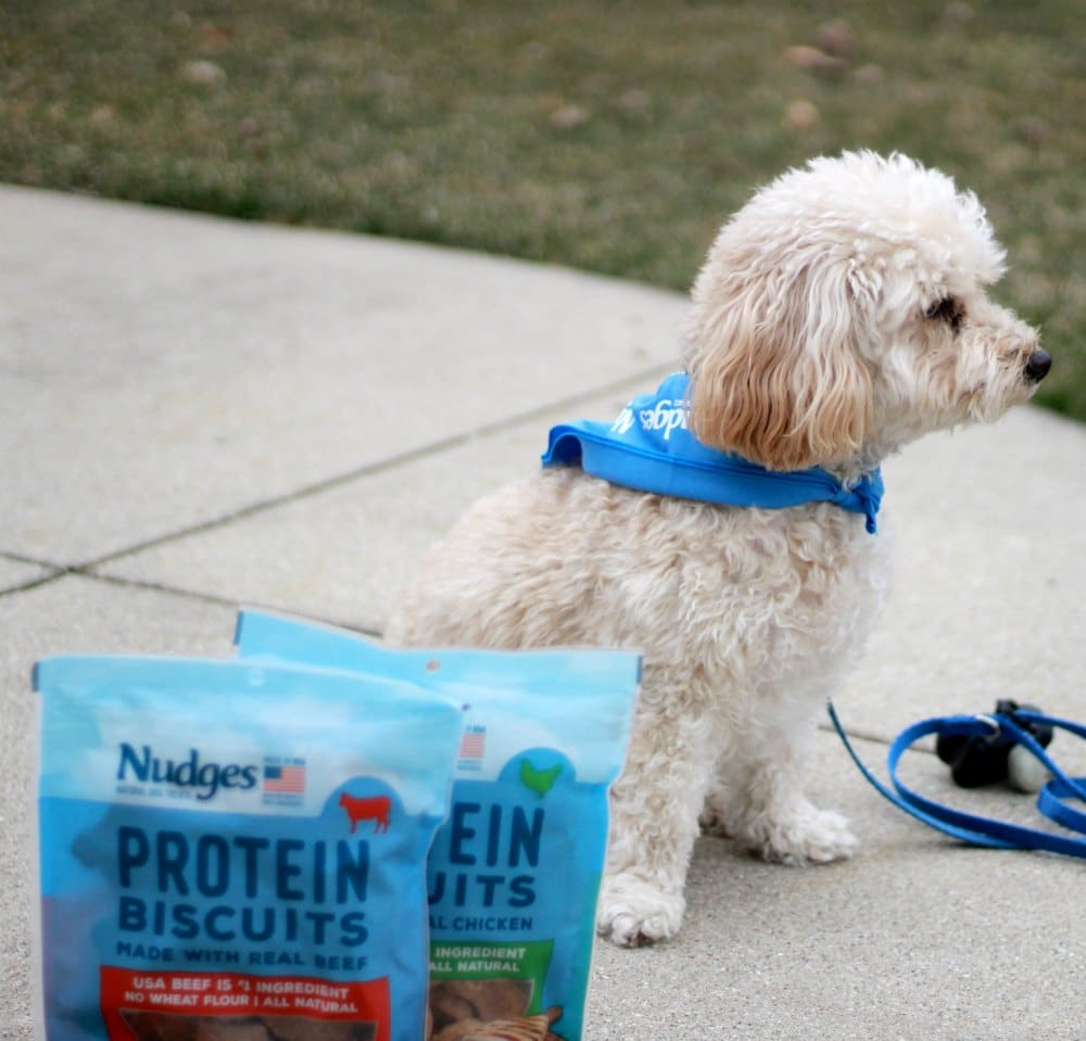 white dog and two bags of Tyson Nudges treats